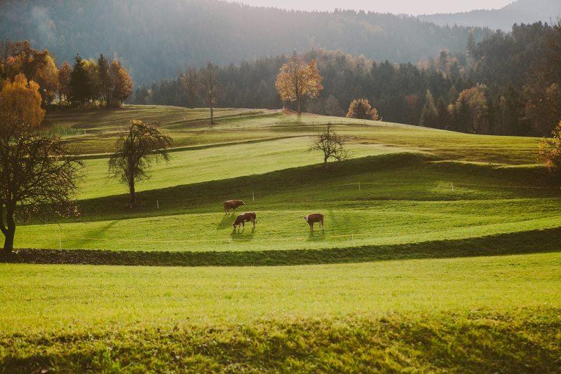 Turistična kmetija na Koroškem, KMETIJA SAMEC